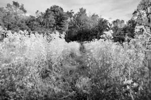 fotograf.stina .gronbech.organic.farm9  300x200 fotograf.stina.gronbech.organic.farm9