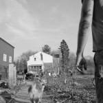 Stina Grønbech fotograf tromsø sorthvitt bw organic farm hund